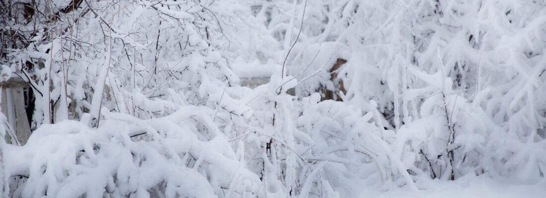 winter-3130210_1280